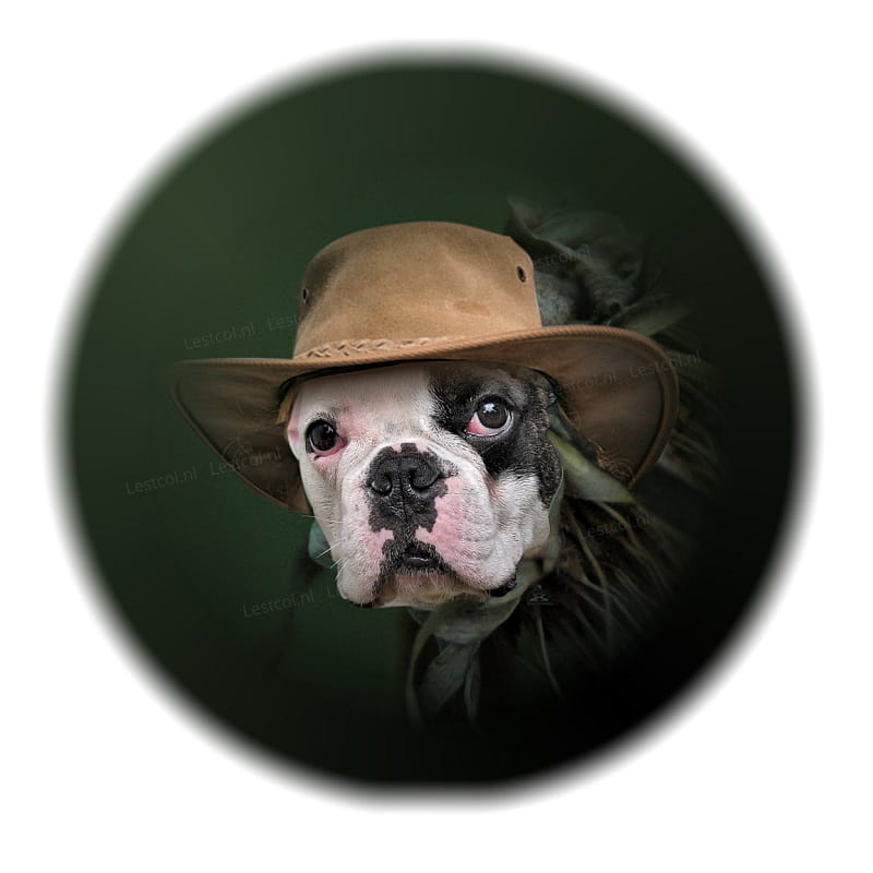 Fine art Bulldog
