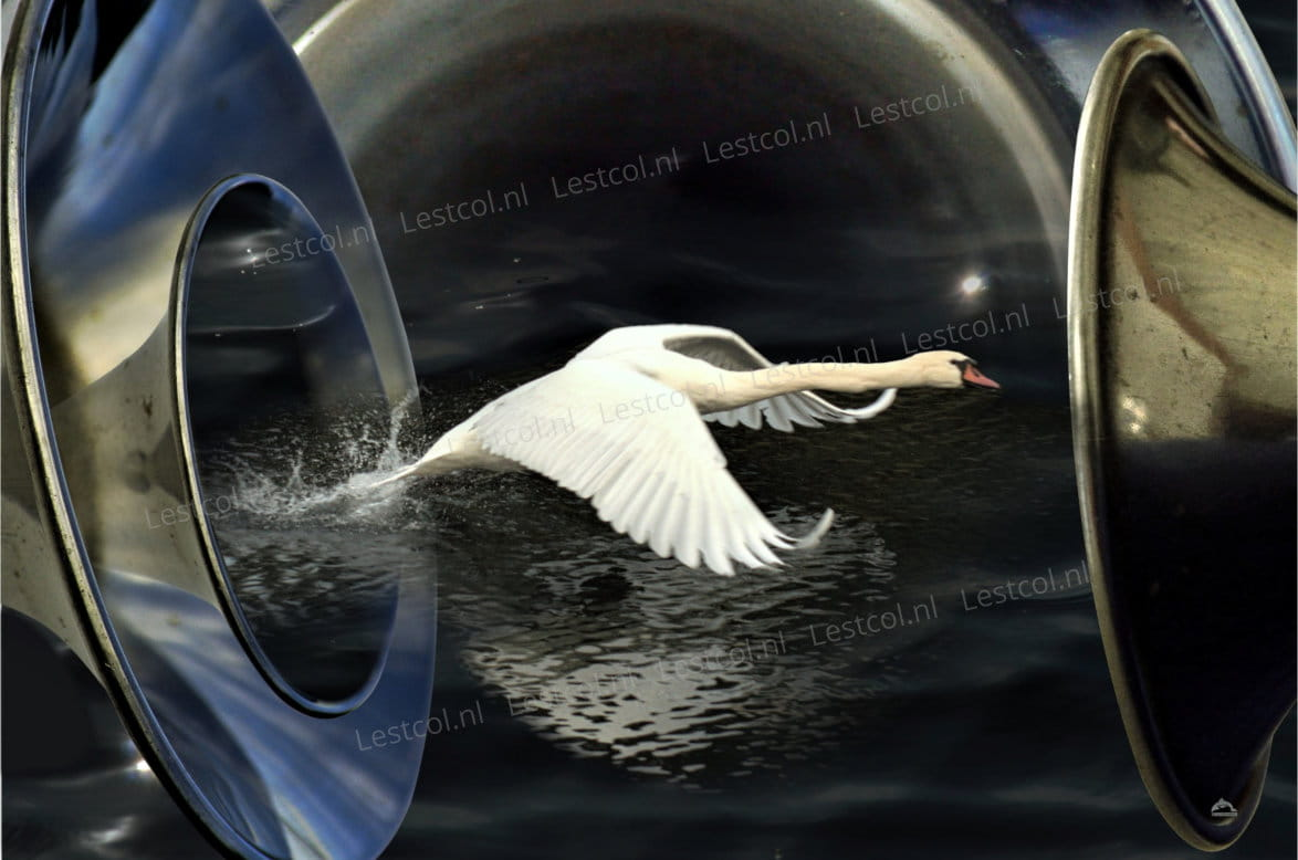 Fine art Flying swan crossing